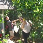 adam in garden